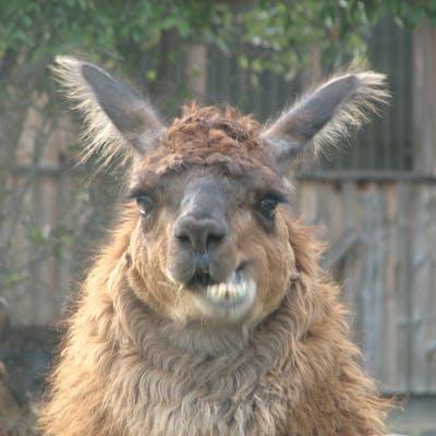 Rama Llama DingDong